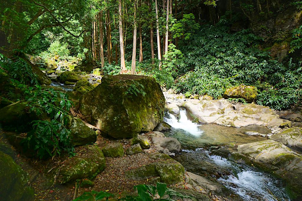 Salto do Prego - Wanderung am Flussverlauf oberhalb des Wasserfalls - Sao Miguel - Azoren