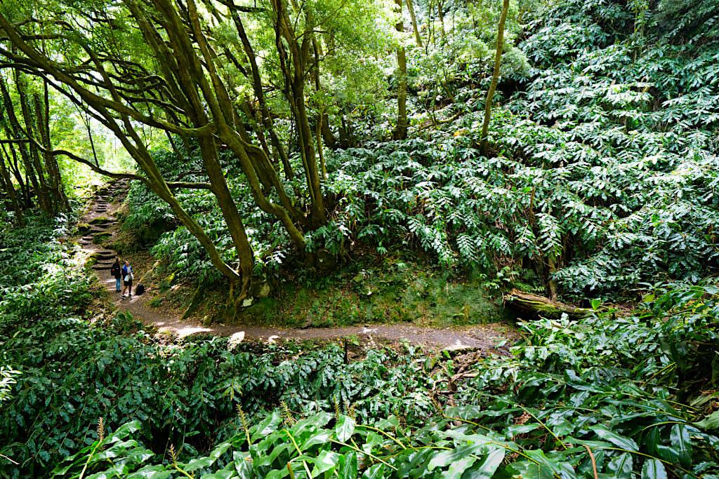 Salto do Prego Wanderung - Invasion des Schmetterlingsingwers - Sao Miguel - Azoren