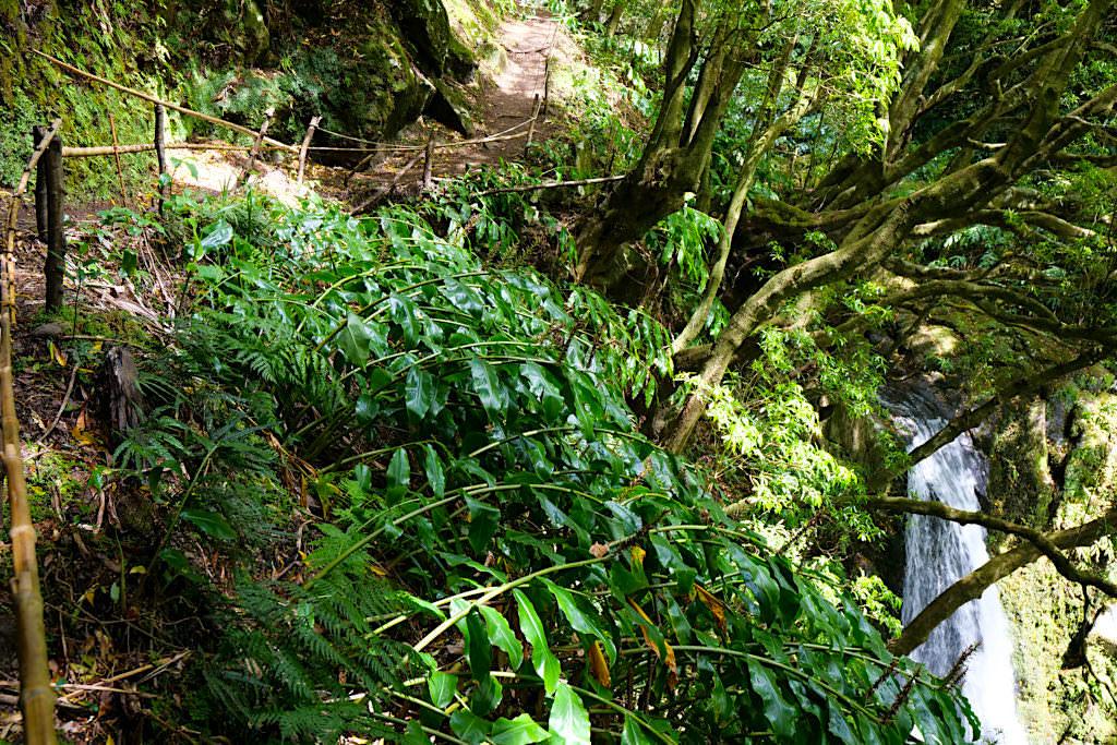 Salto do Prego Wanderung - Wasserfall & Weg zum Dach des Wasserfalls - Sao Miguel - Azoren