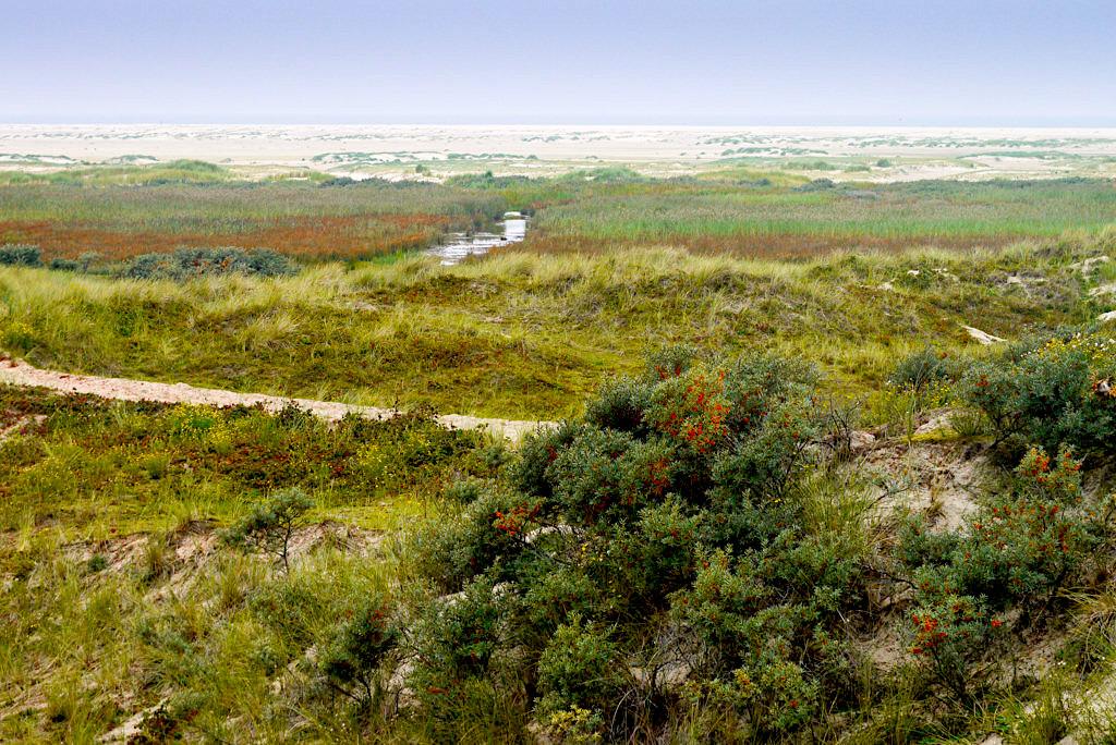 Borkum Dünenlandschaft im Norden - Nationalpark Niedersächsisches Wattenmeer - Ostfriesische Inseln
