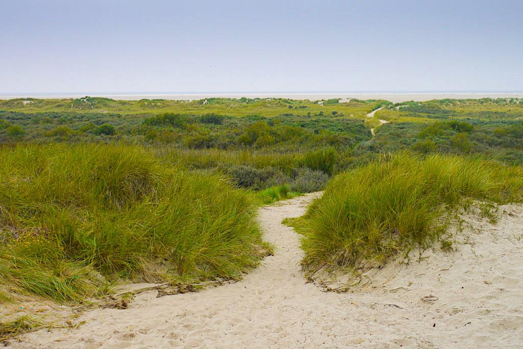 Borkum: Einsame & ruhig sind die Dünenlandschaft an der Nordküste - Nationalpark Wattenmeer - Ostfriesische Inseln