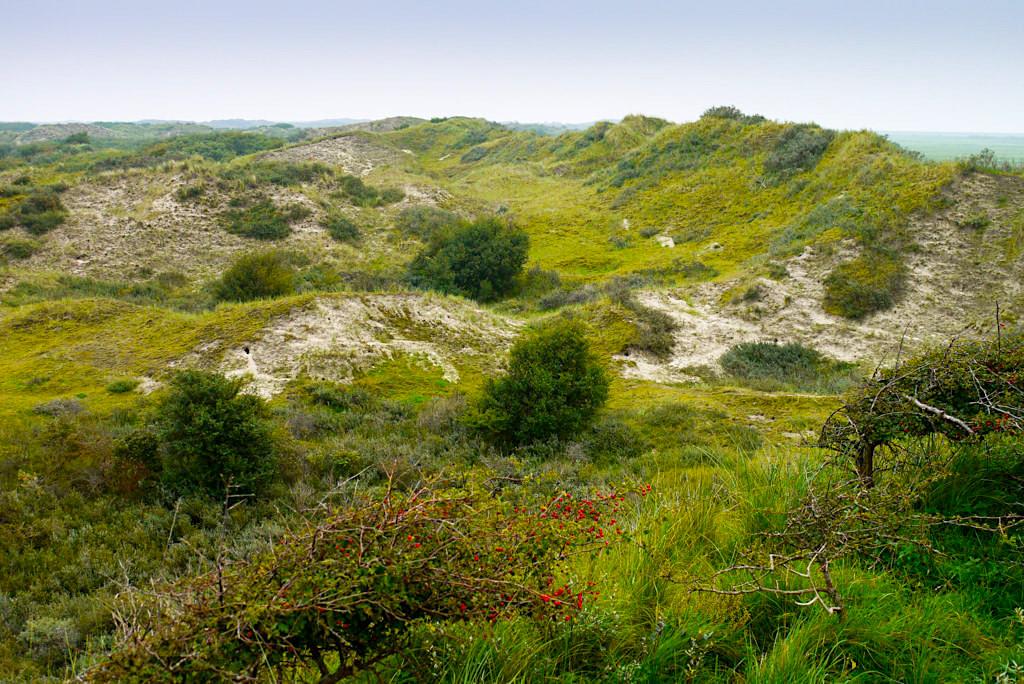 Borkum - Aussichtsplattform Olde Duene: Blick auf das ursprüngliche Inselinnere - Ostfriesische Inseln