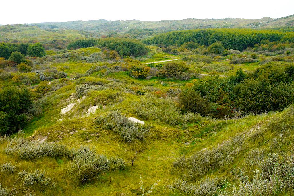 Borkum - Olde Düne Aussichtspunkt über weite ursprüngliche Dünenlandschaften - Ostfriesische Inseln