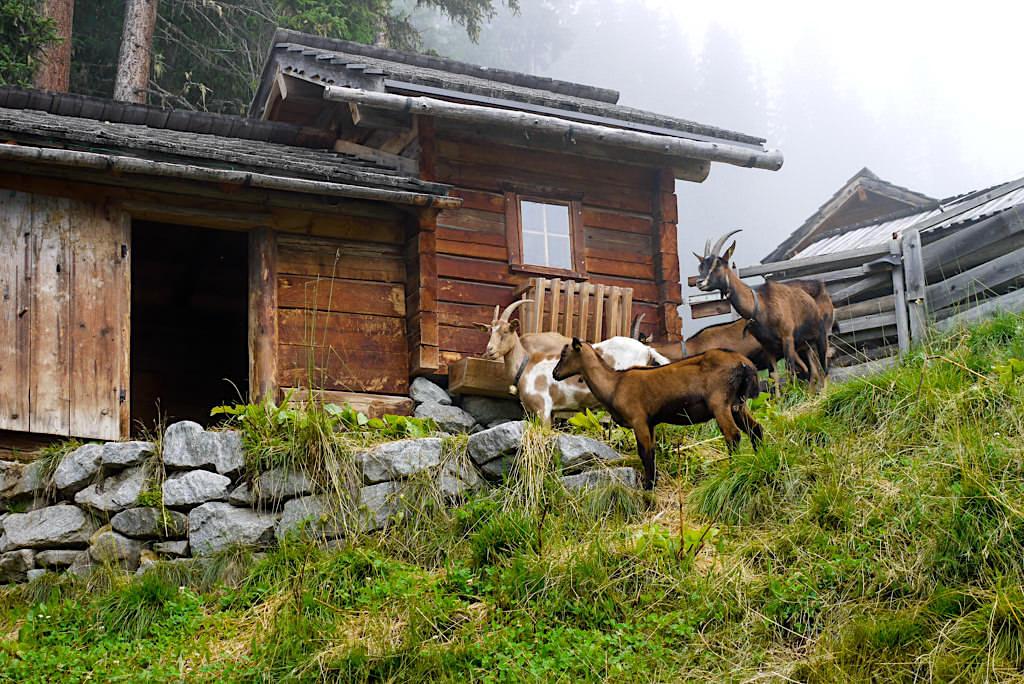 Dias Freizeitpark hoch über Kappl - Paznaun - Österreich