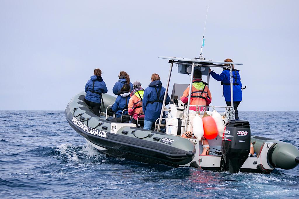 Espaco Talassa - Bequem, schnell, wendig: Hartboden-Gummiboote zur Walbeobachtung auf Pico - Azoren