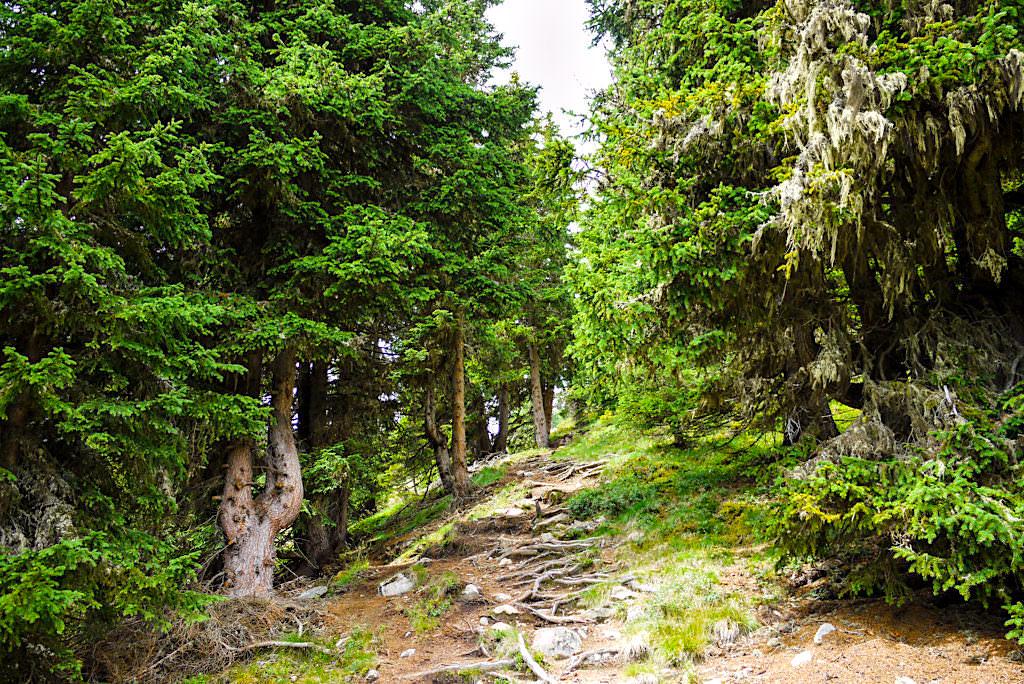 Niederelbehütte Rund-Wanderung vom Alpengasthof Dias startend - Paznaun - Österreich