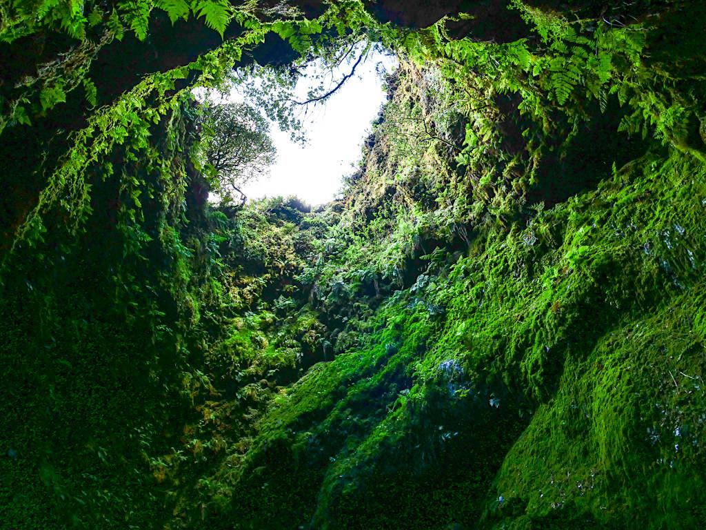 Algar do Calvao - wunderschöner, üppig-grüner Vulkanschlot - Terceira - Azoren