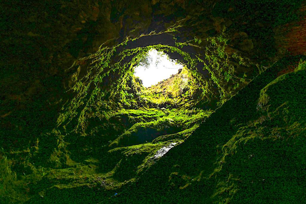 Algar do Carvao - üppig-grüner Vulkankamin mit endemischen Pflanzen auf Terceira - Azoren