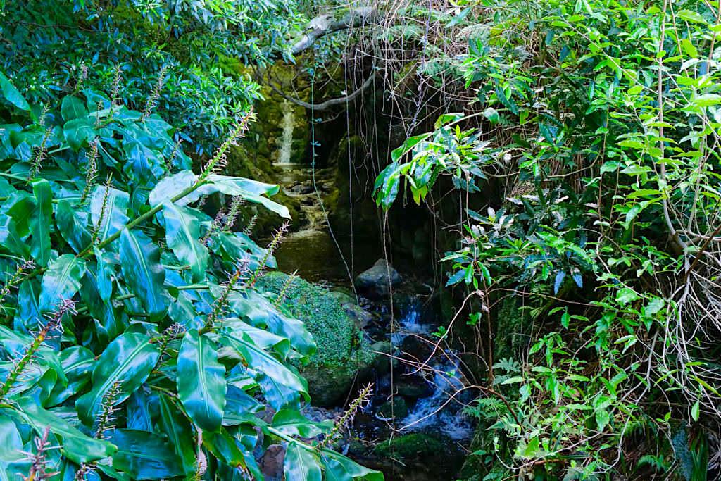 Caldeira da Cima - Erste Brücke mit kleinen Wasserfall - Sao Jorge - Azoren