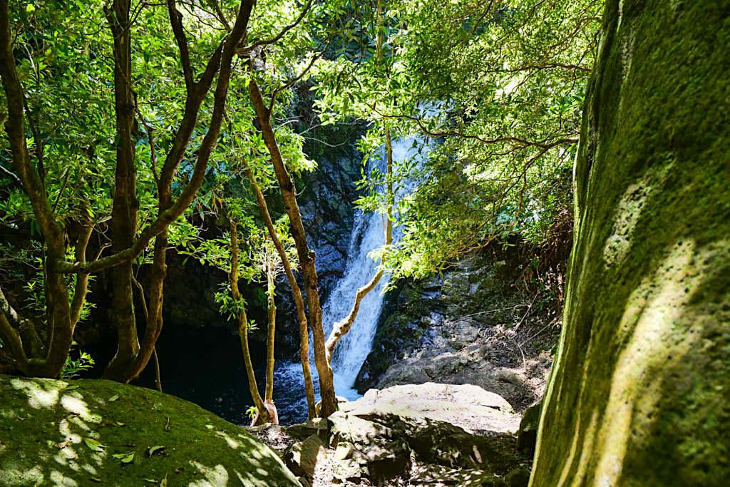 Wanderung von Serra do Topo zur Faja Cubres - Faszinierender Wasserfall & Bademöglichkeit - Sao Jorge, Azoren
