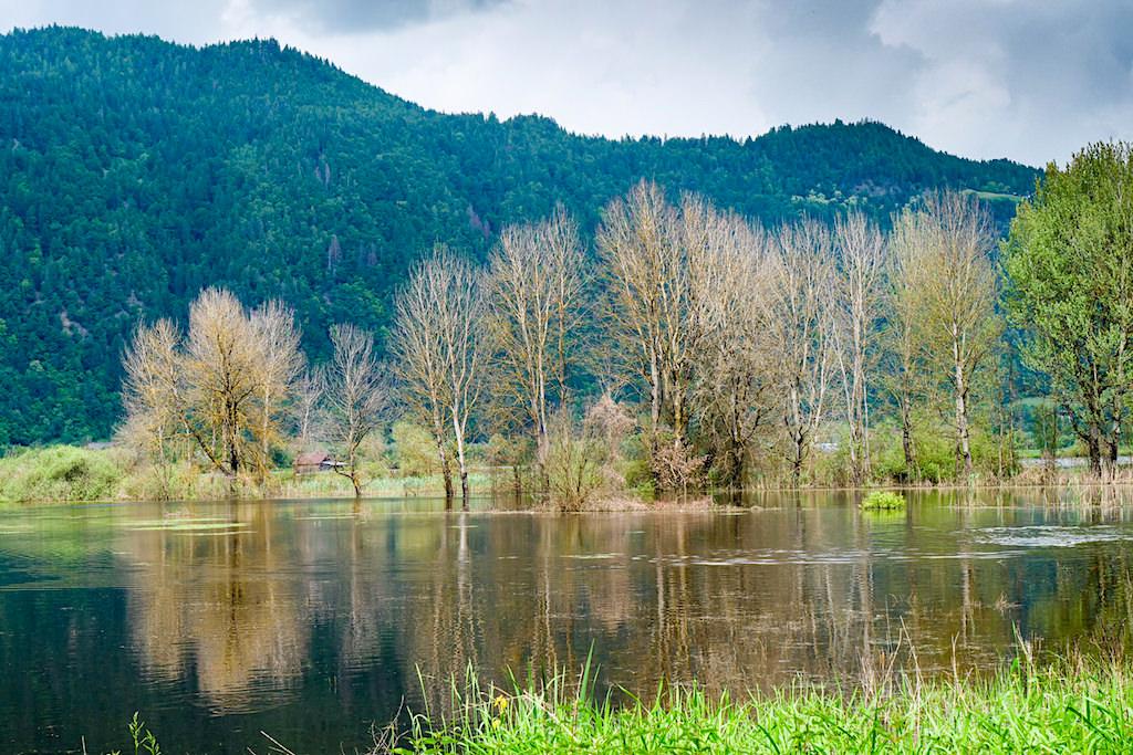 Slow Trail Bleistätter Moor - Leichte atemberaubende Wanderung in Steindorf am Ossiacher See - Kärnten, Österreich