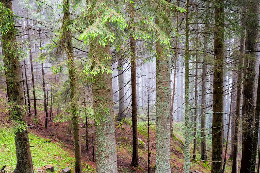 Slow Trail Mirnock - Sagenumwoben: Geschichten von Riesen, Kobolde, Feen ranken sich um den Mirnock - Kärnten in Österreich