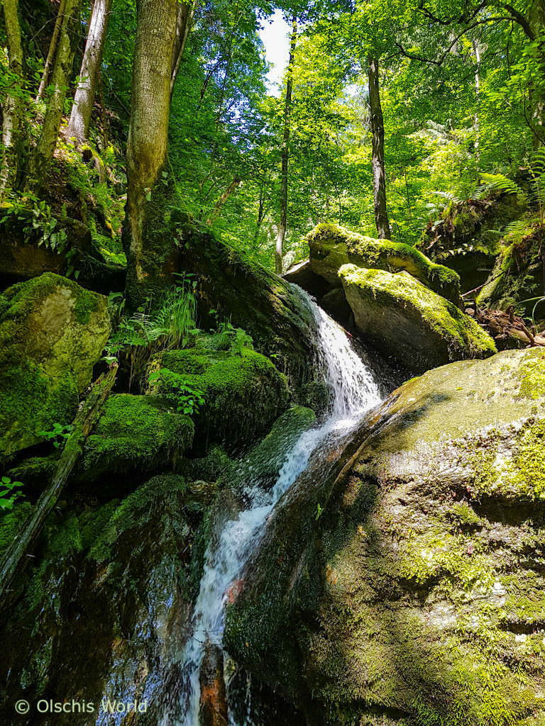 Slow Trail Römerschlucht - Faszinierende Genusswanderung vom Wörthersee zum Forstsee mit Urwald-Feeling - Kärnten, Österreich