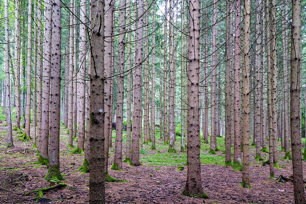 Slow Trail Zwergsee - Vor lauter Bäume kein Wald zu sehen - Kärnten in Österreich