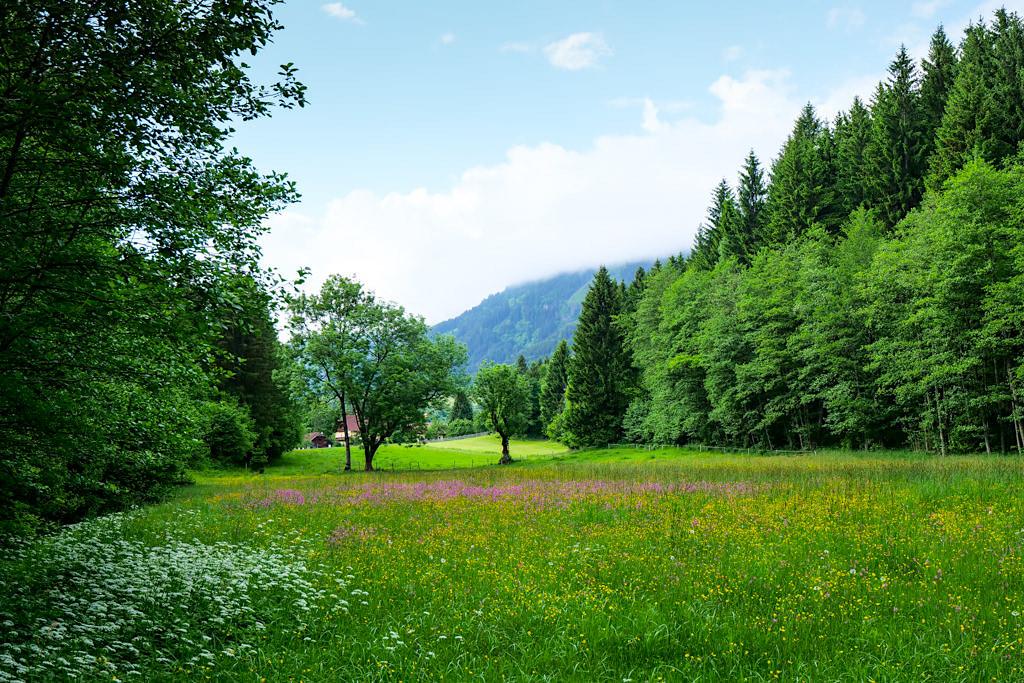 Slow Trail Zwergsee - Bunte Blumenwiesen auf dem Weg - Genusswandern in Kärnten - Österreich