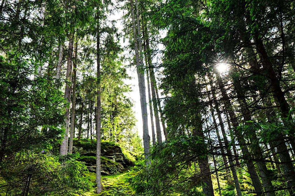 Slow Trail Zwergsee - Einladung zum Waldbaden & Wald erleben mit allen Sinnen - Millstätter Slow Trails - Kärnten in Österreich