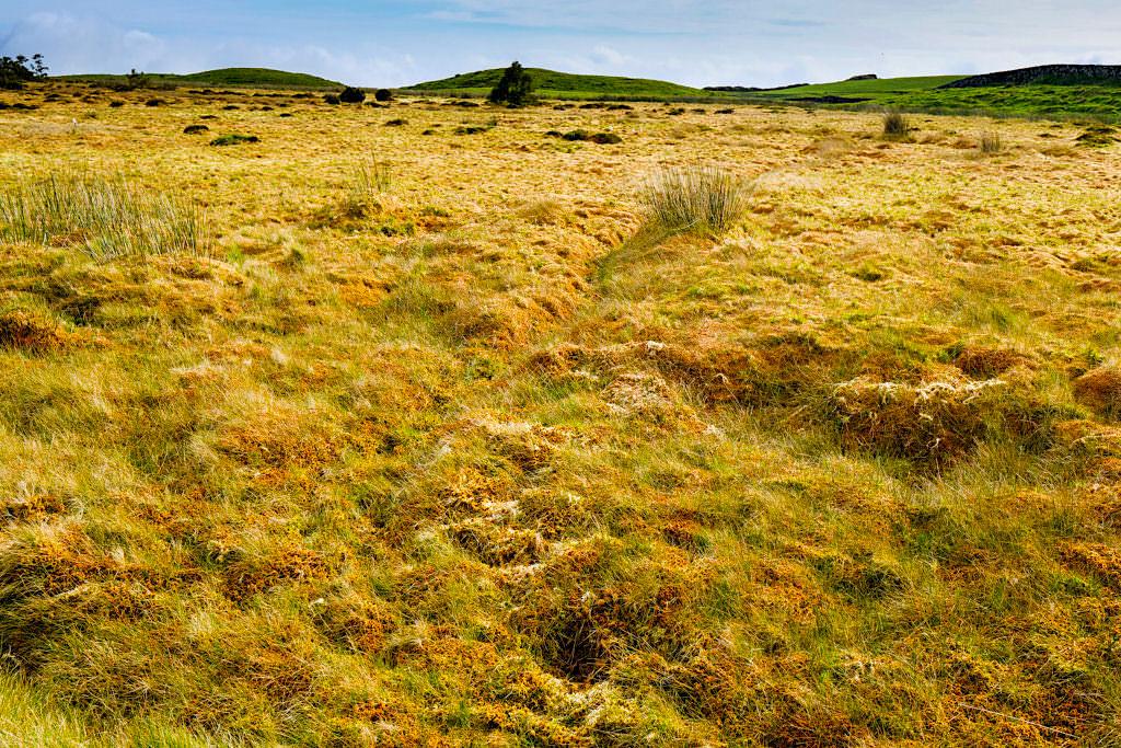 Atemberaubend schöne Torfmoos-Landschaft auf Terceira - Azoren