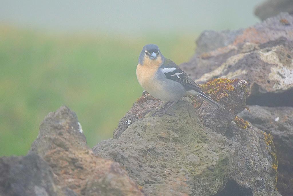 Hervorragende Bildqualität: Vogel im dichten Nebel - Panasonic Lumix G9 - Passenger On Earth