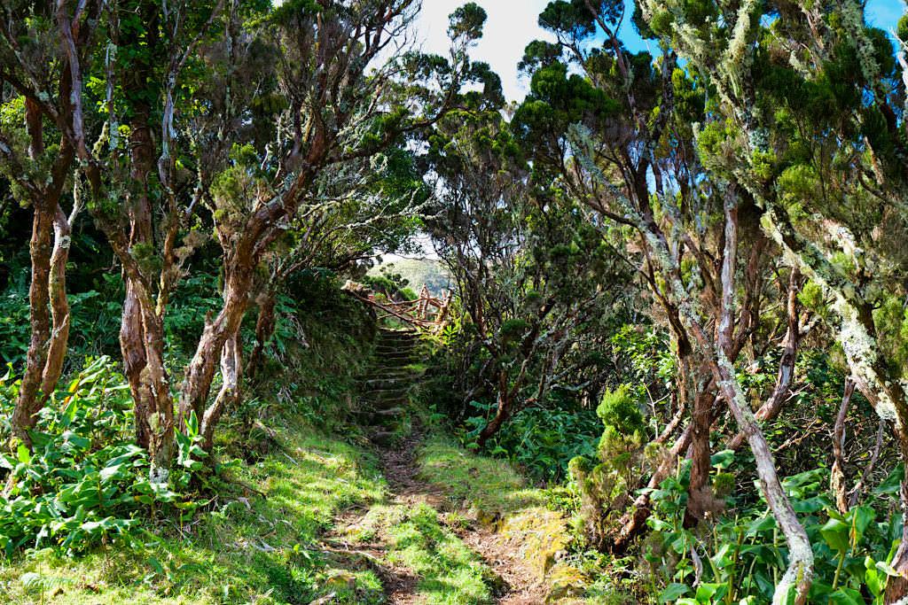 Wanderpfad von Serra do Topo über die Caldeira do Santo Cristo zur Faja dos Cubres - Sao Jorge - Azoren