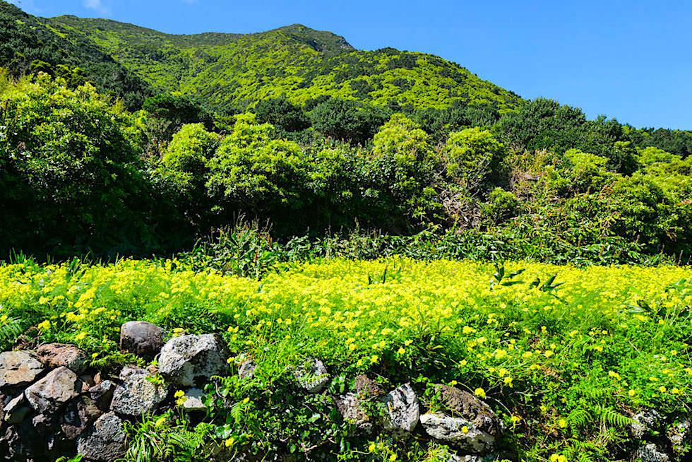Wanderung von der Serra do Topo zur Faja de Caldeira do Santo Cristo - Blühende Wiesen - Sao Jorge, Azoren