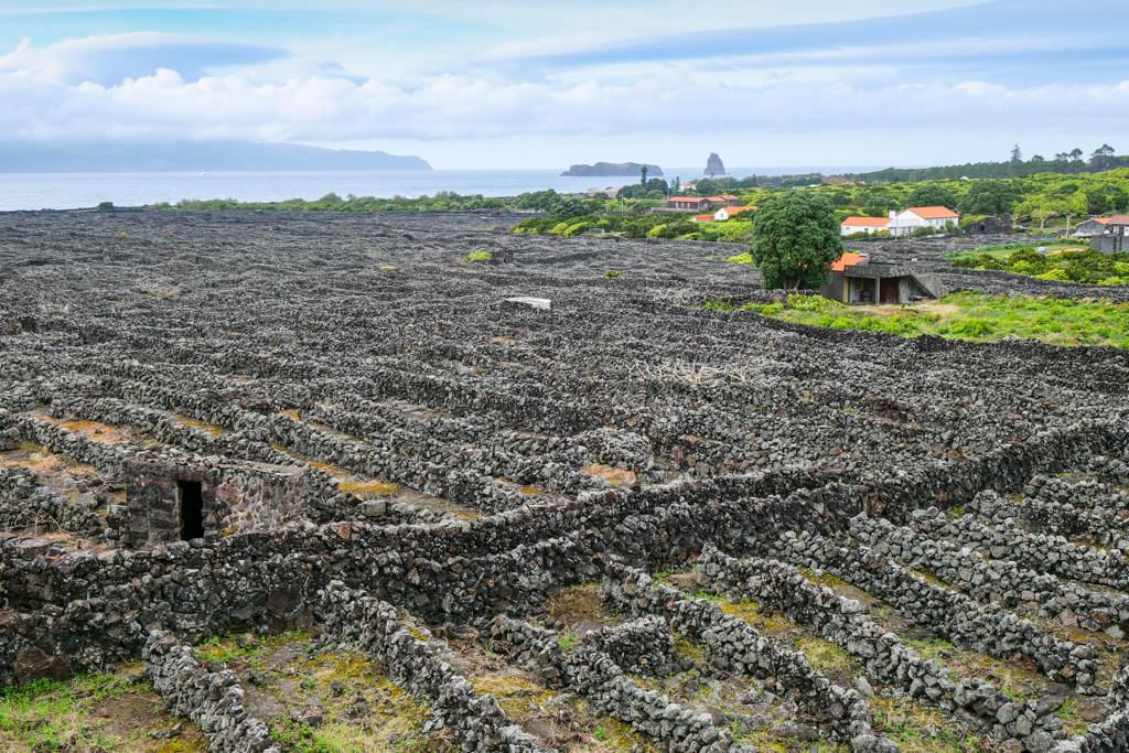 Faszinierender, schöner Ausblick von Moinho do Frade bis nach Faial & vorgelagerte Inseln - Verdelho Weinanbaugebiet - Pico, Azoren