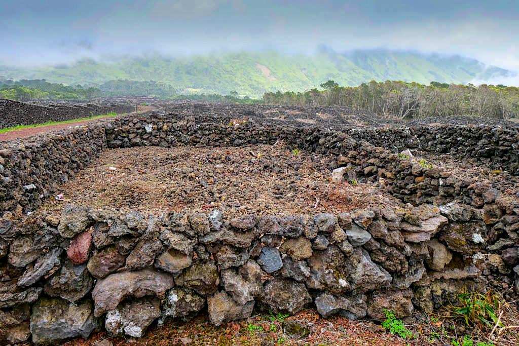 Currias, so werden die Lavamauern um Weinparzellen auf Pico genannt - Azoren