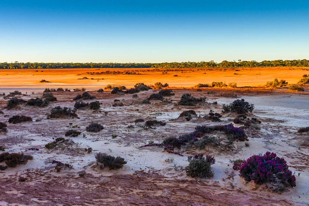 Dundas Nature Reserve: Überwältigende Farbstimmung in der Morgensonne - Nullarbor Highlight - Western Australia