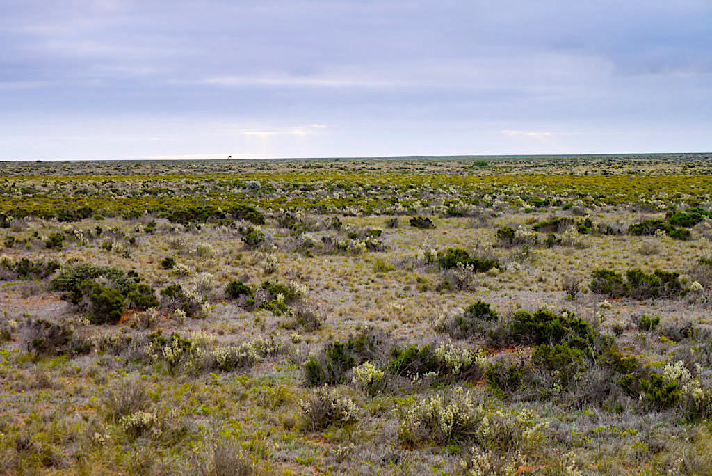 Nullarbor - Endlose Weite: kein Baum, kein Hügel, nichts was den Blick in die Ewigkeit aufhalten könnte - South Australia