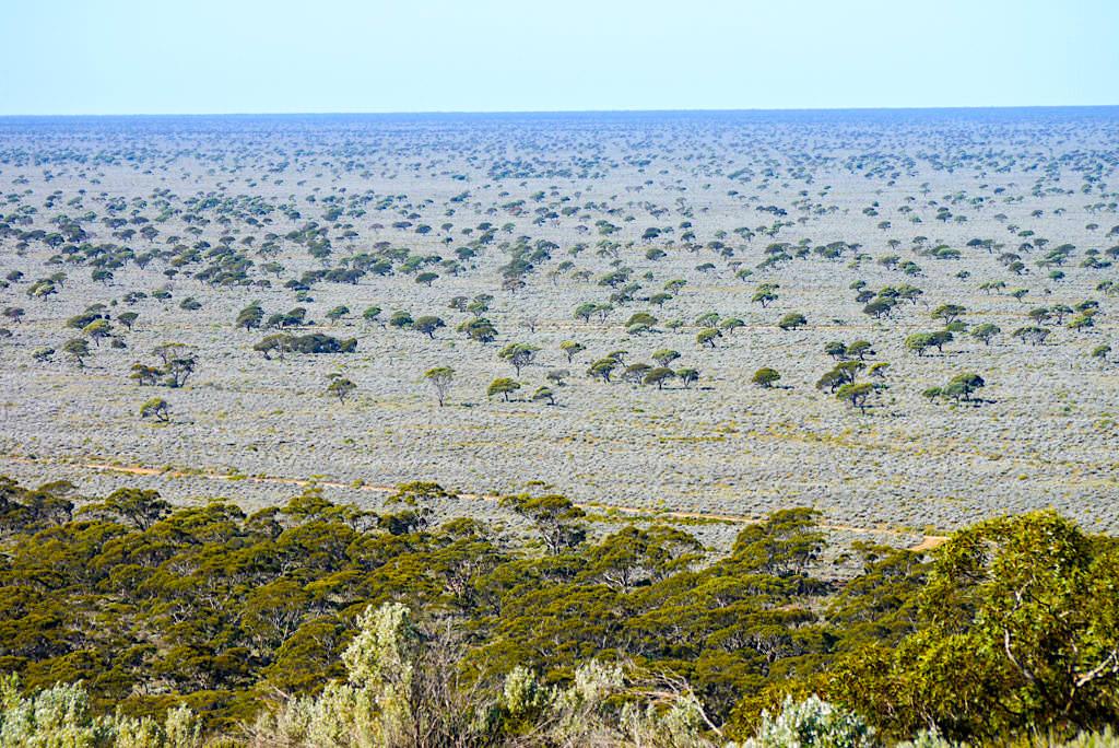 Nullarbor mehr als kein Baum - Faszinierender Ausblick vom Maduras Pass auf die Bucht - Western Australia