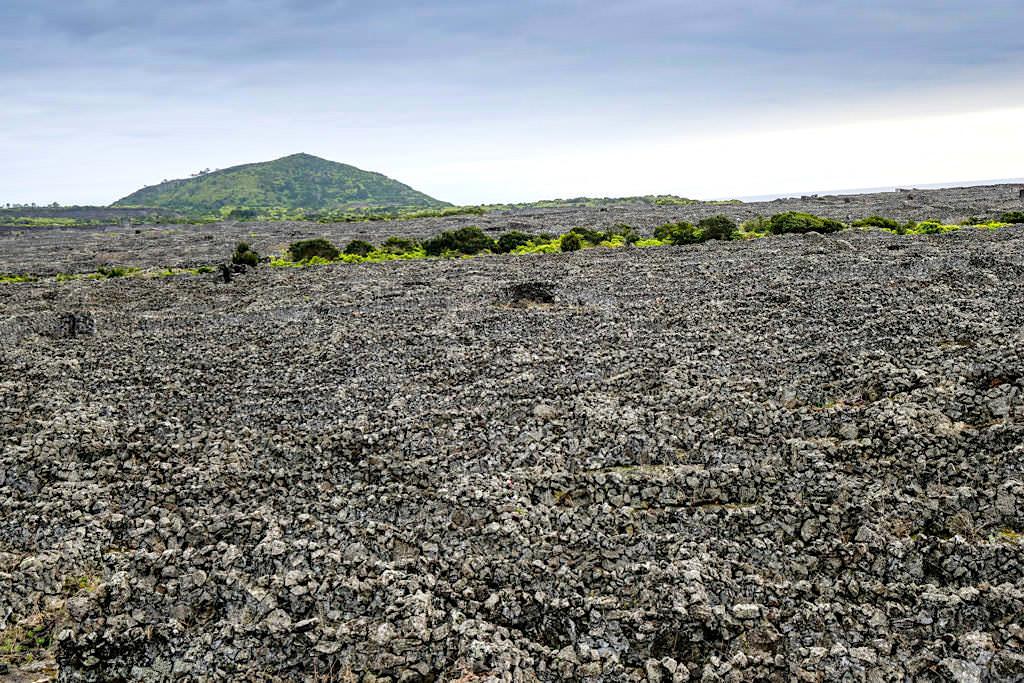 Pico Wein - Mühsam, händisch erbaute Irrgarten aus niedrigen Schutzmauern aus Lavasteinen schützen die Weinreben - UNESCO Weltkulturerbe - Azoren