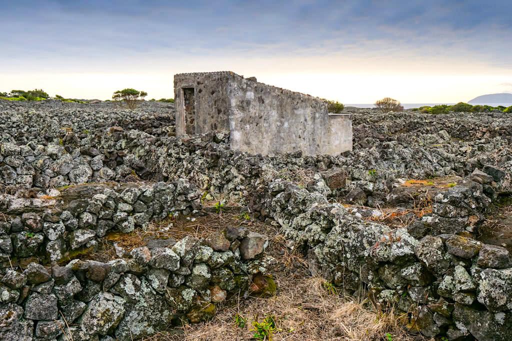 Pico Wein & Weinanbau - Lavasteinmauern schützen die Weinreben - Azoren