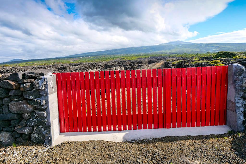 Pico Wein wird in runden Currais angepflanzt im Nordwesten der Azoreninsel