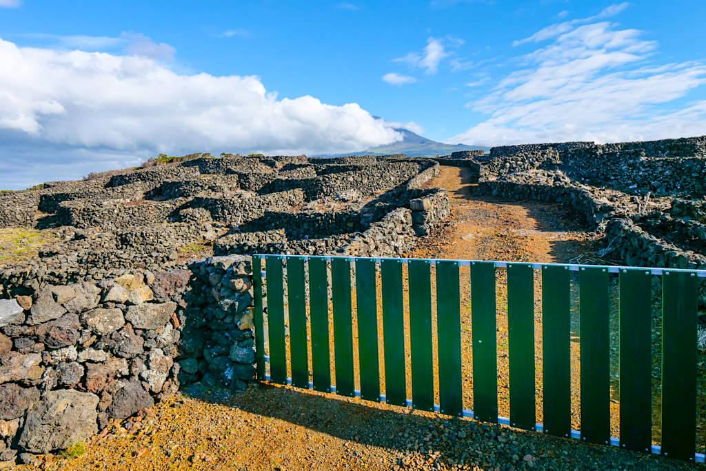 Pico Weinanbau - Parzellen mit steinernen Schutzmauern schützen Rebpflanzen vor Wind und Auskühlung - Azoren