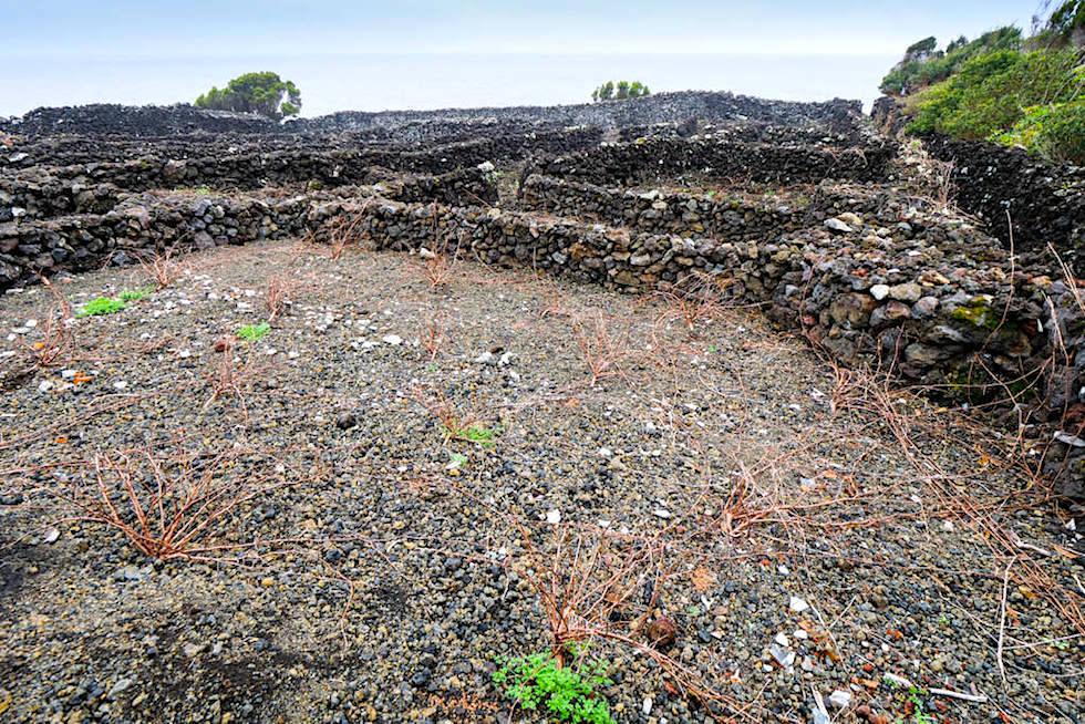 Pico Weinanbau - Schutzwall für Rebpflanzen ermöglichen Weinertrag auch unter schwierigen Bedingungen - Azoren
