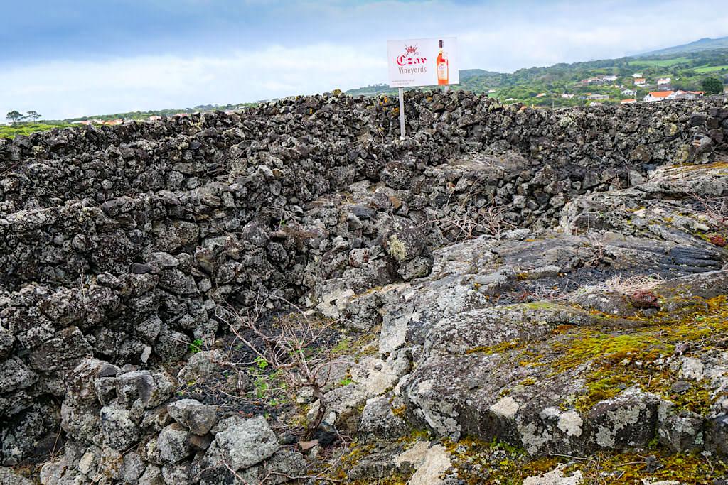 Pico Weine - Wanderung durch das historische Verdelho Weinanbaugebiet bei Criacao Velha - UNESCO Weltkulturerbe - Azoren