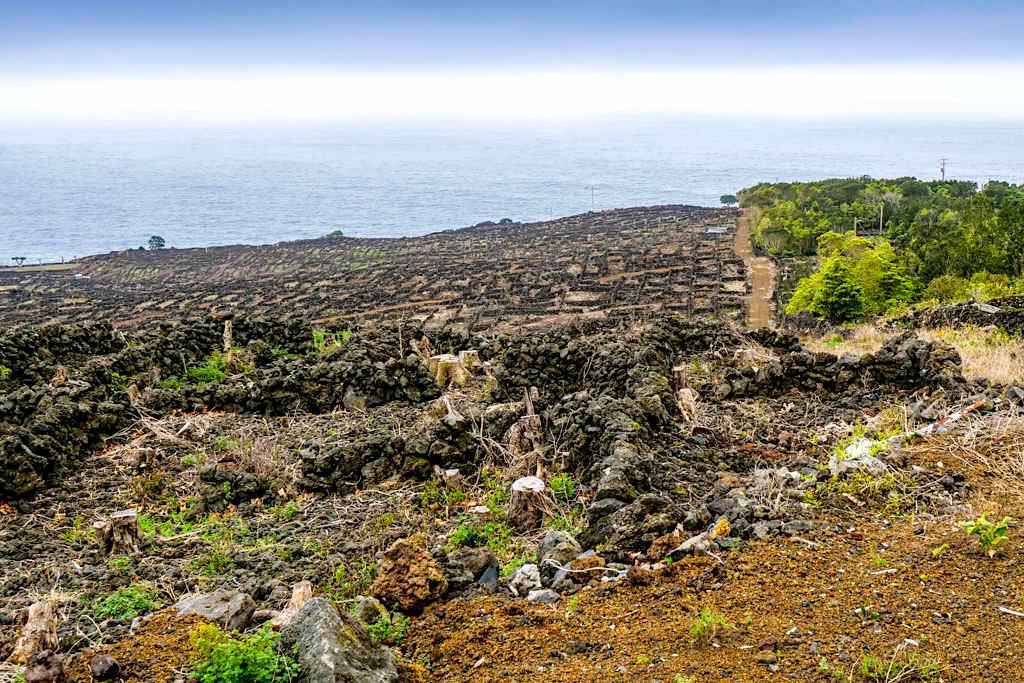 Riesige Weinterrassen Labyrinthe oberhalb von Ponthina - Südküste Pico - Azoren