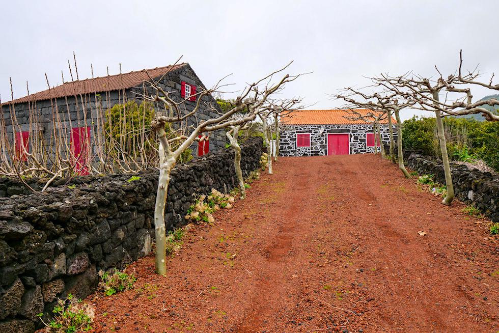 Porta da Prainha do Galeao - Adegas, Häuser auf Weingütern in denen die Trauben verarbeitet werden - Pico, Azoren