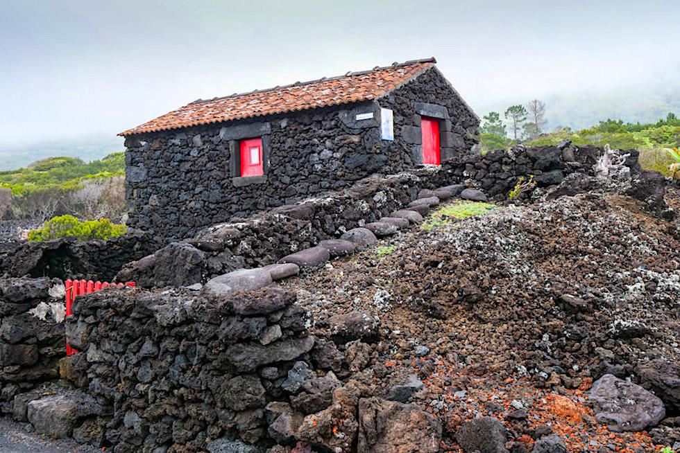 Schwarz Rot die Farben der Verdelho Pico Weine - typisches Adegas in den Weinterrassen - Azoren