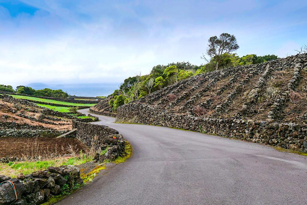 Verdelho Weine - Wanderung durch Picos Weinanbaugebiet - Pico, Azoren