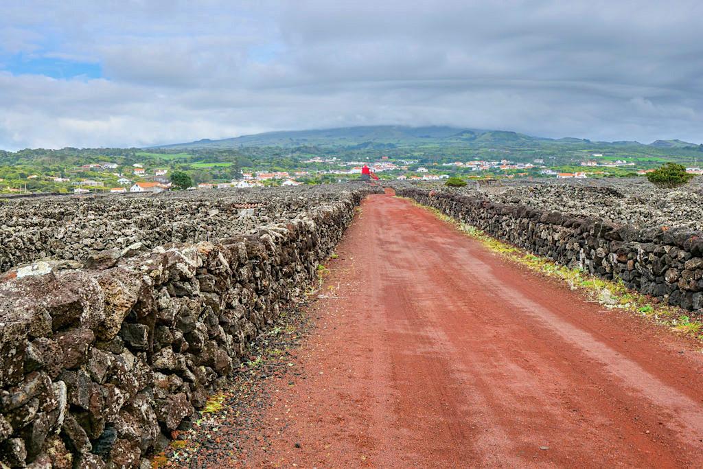 Schöne Wanderung PR5 PIC auf Pico zu den Weinanbaugebieten - Criacao Velha, Currais & Pico Weine - Azoren