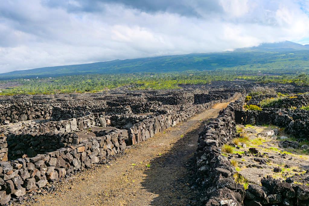 Wanderung PR10 PIC durch die Pico Weinregion im Nordwesten der Insel - Azoren