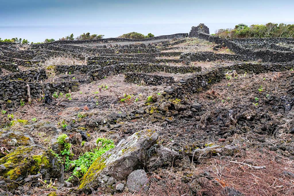 Schönste Weinanbau Gebieter auf Pico: zwischen Porta da Prainha & Sao Mateus - Azoren