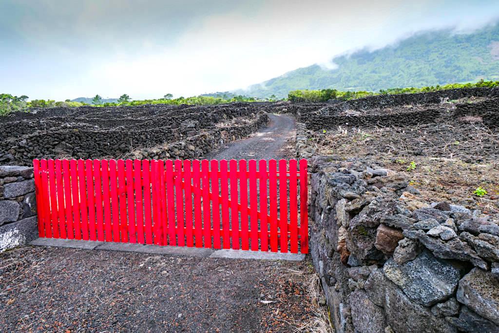 Rot und Schwarz: typisch für den Weinanbau Verdelho Weine auf Pico - UNESCO Weltkulturerbe - Azoren
