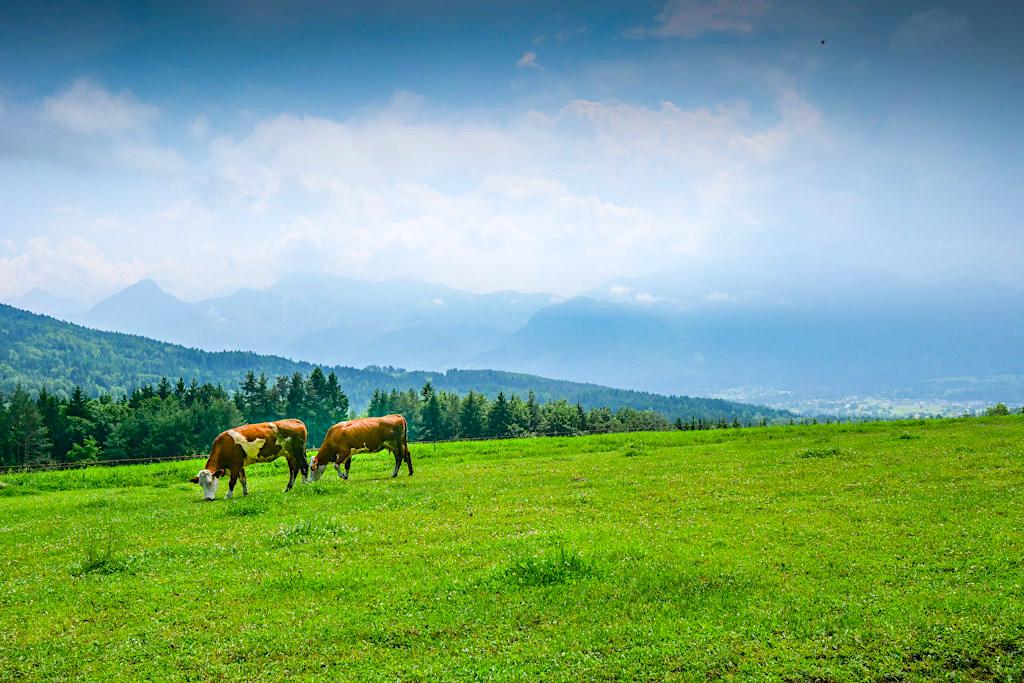 Zu den Kraftorten am Wörthersee: Ausblick vom Fuße des Kathreinkogels - Rundwanderung - Kärnten, Österrreich