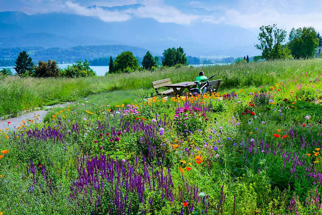 Fantastischer Ausblick auf den Faaker See, Blumenwiesen & Berglandschaft- Kärnten, Österreich