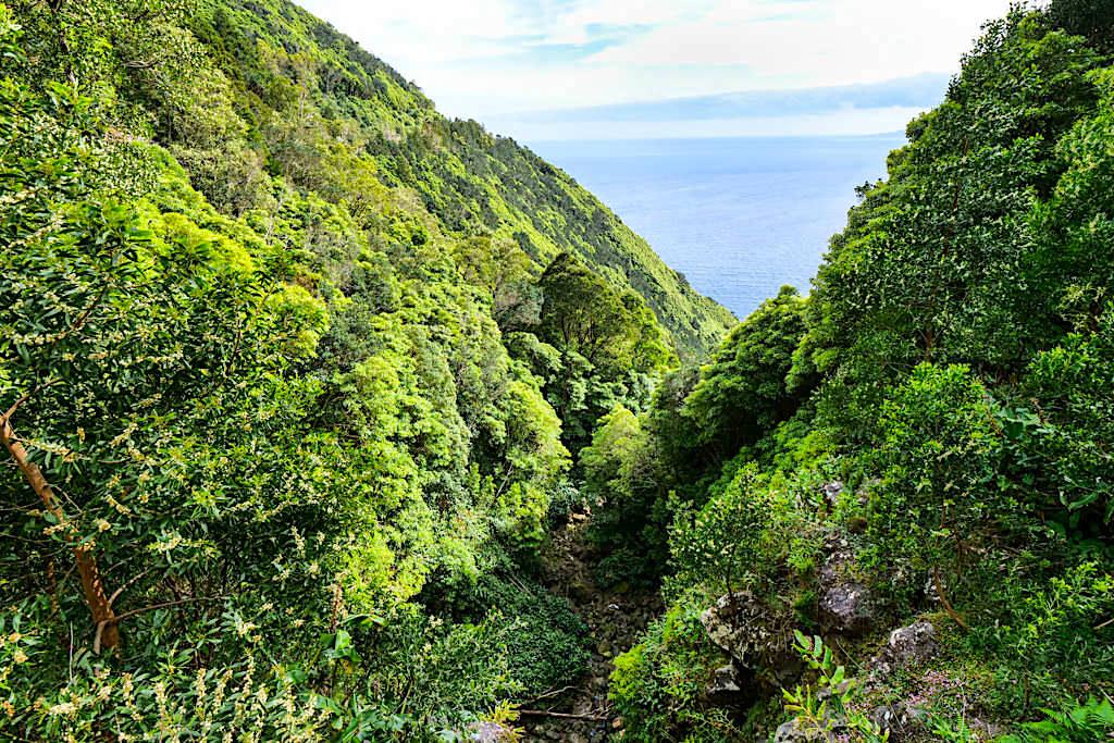 Faja dos Vimes - Faszinierende Küstenstraße auf dem Weg zur Faja - Sao Jorge, Azoren