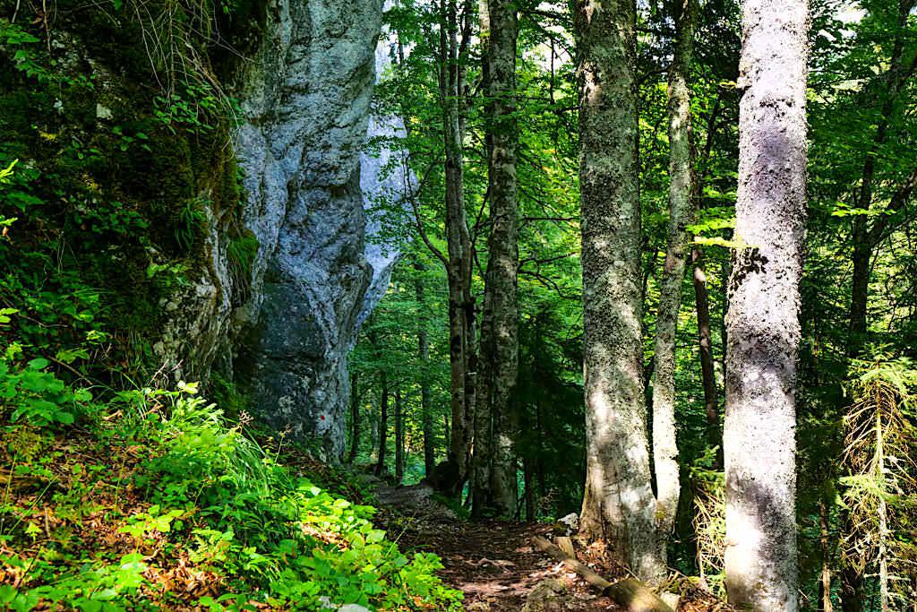 Wunderschöner Fichtenwald verbindet die beiden Laghi di Fusine - Weißenfelser Seen - Tarvisio, Italien