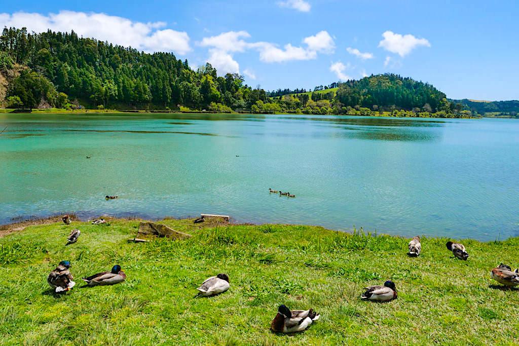 Lagoa das Furnas - Ausblick vom Nordufer des Furnas Sees - Sao Miguel, Azoren
