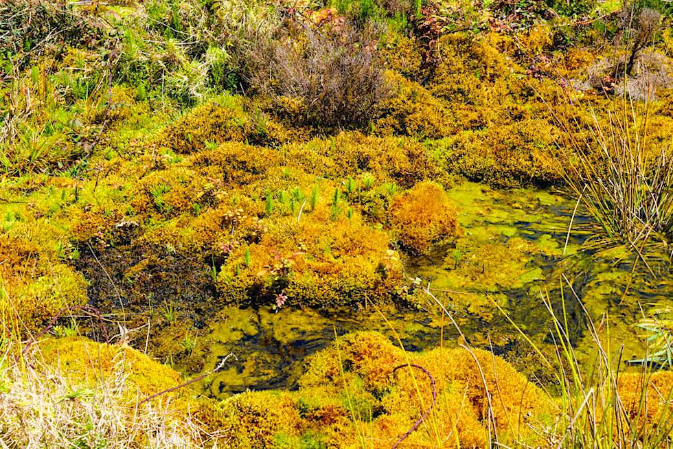 Vale das Lombadas - faszinierende Mooslandschaften im Lombadas Tal - Sao Miguel, Azoren