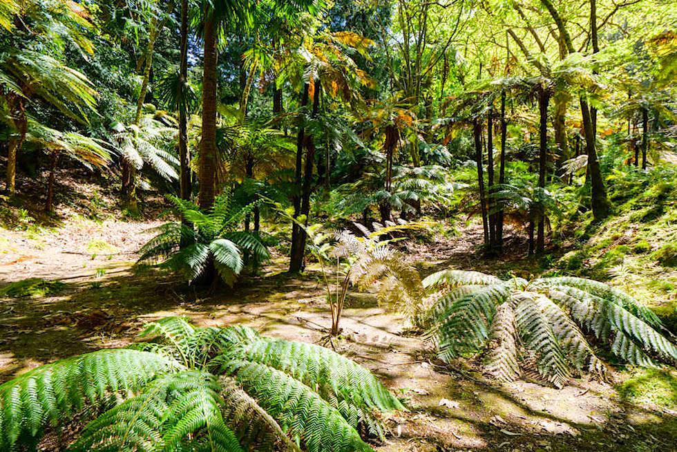 Ein wirklich sehenswerter Park: Parque Jose do Canto am Westufer des Lagoa das Furnas - Sao Miguel, Azoren
